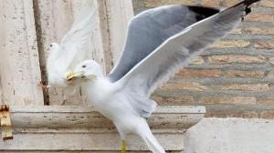 gaviota-paloma ataque papa francisco